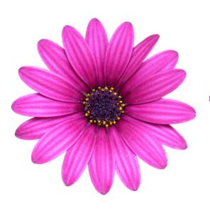 Décoration fleur rose