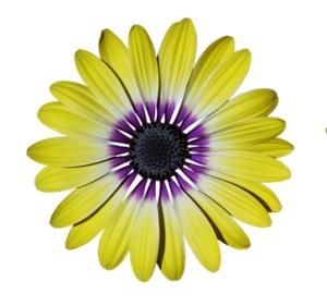 Décoration fleur jaune