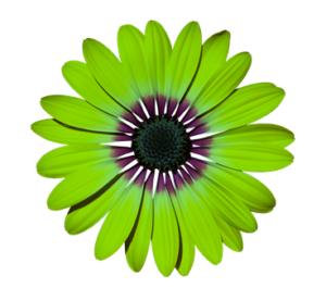 Décoration fleur verte